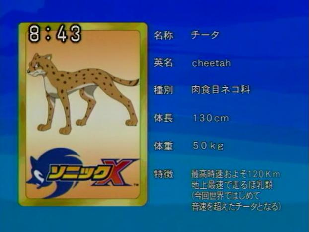 Cheetah - Sonic X Profiles - Gallery - Sonic SCANF Cheetah